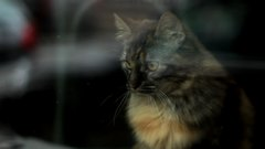 Cat_in_the_window - free HD stock video